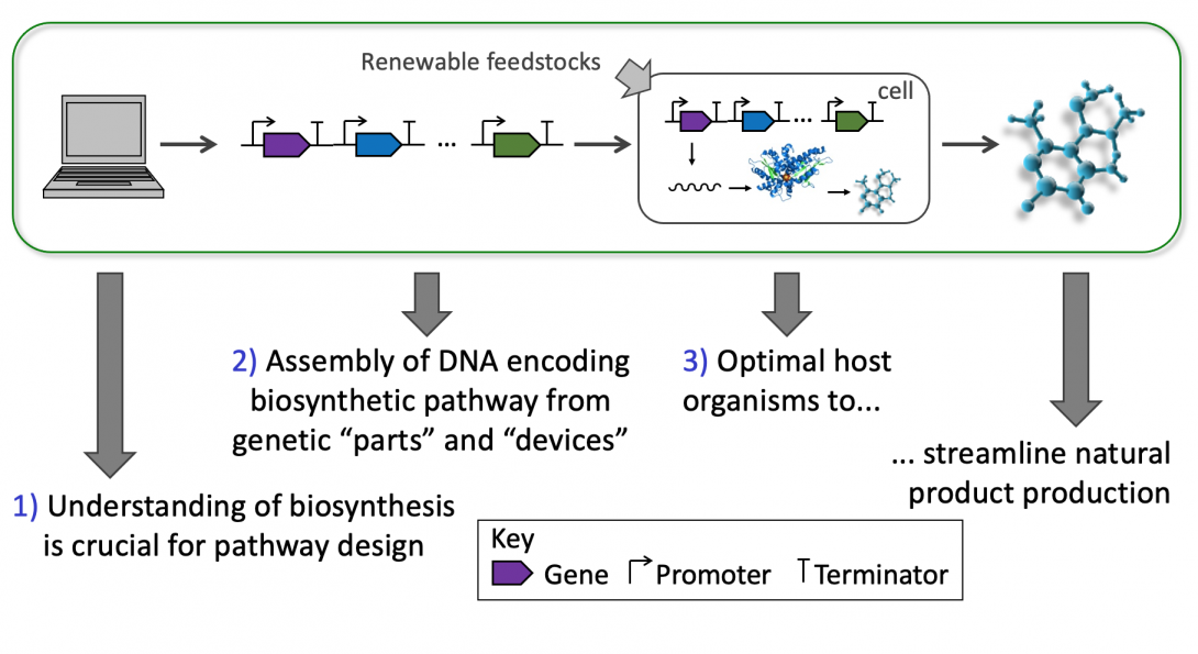 Microbial production workflow