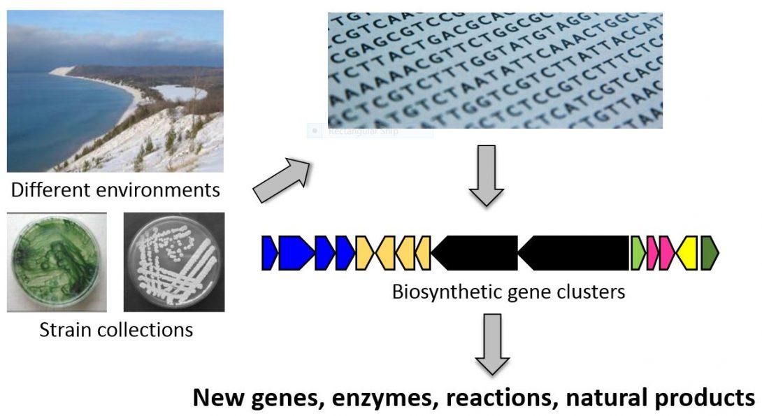 Genome mining workflow